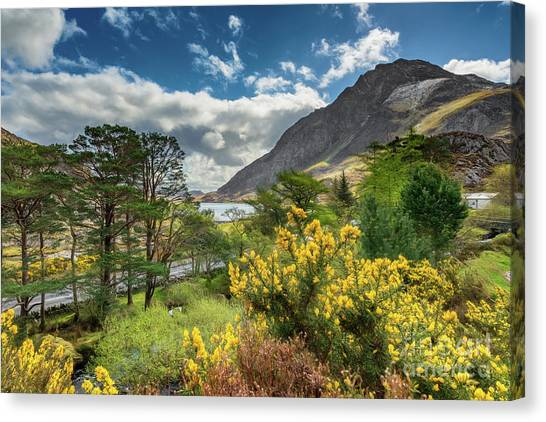 Tryfan Mountain Canvas Print - Mountain Flora by Adrian Evans