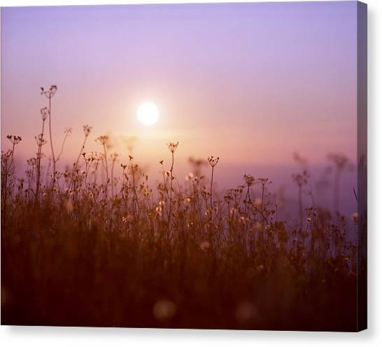 Mountain Flower Rising Canvas Print by Benjamin Garvey