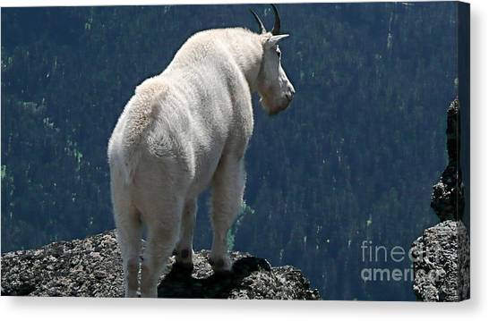 Mountain Goat 2 Canvas Print