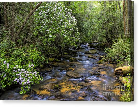 Mountain Laurels Light Up Panther Creek Canvas Print