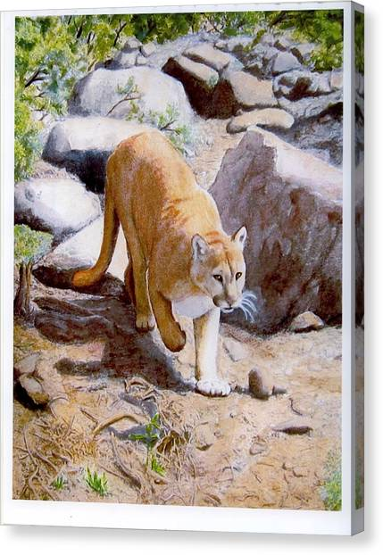 Mountain Lion In The Wild Canvas Print by Lorraine Foster