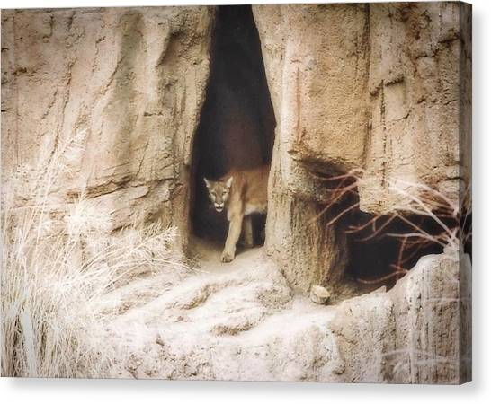 Mountain Lion - Light Canvas Print