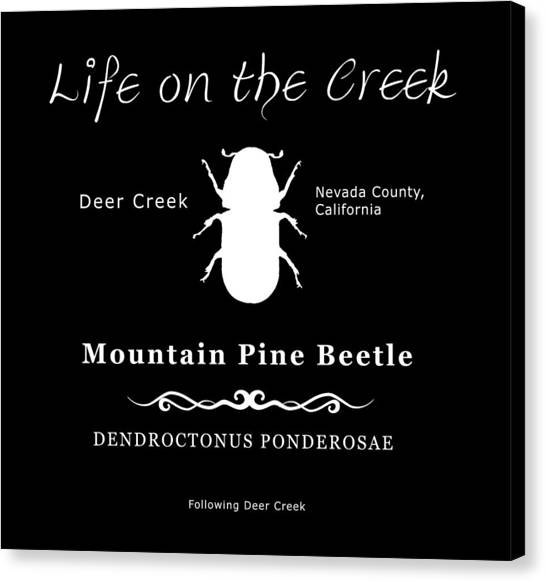 Mountain Pine Beetle White On Black Canvas Print