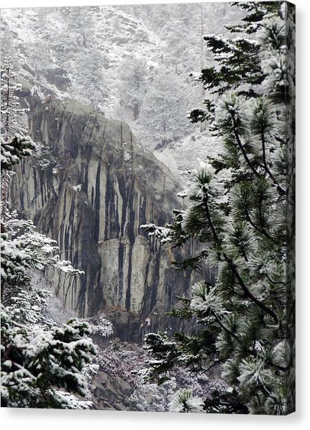 Mountain Pine IIi Canvas Print by D Kadah Tanaka