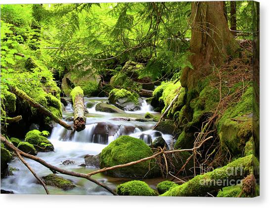 Mountain Stream In The Pacific Northwest Canvas Print