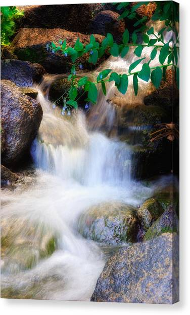 Mountain Stream Wasatch Mts. Utah Canvas Print