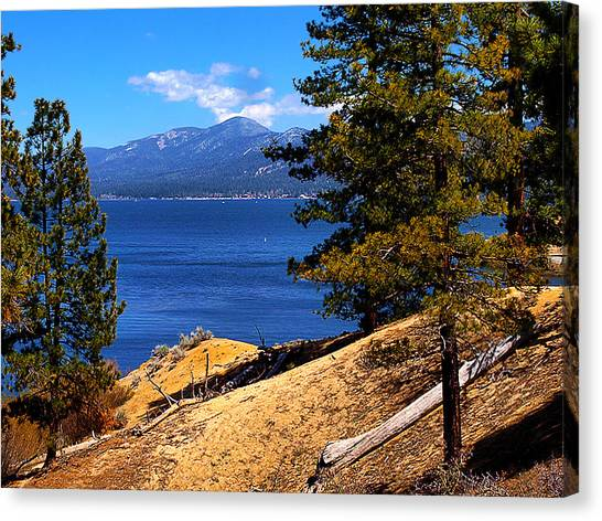Mountain Thru The Pines Canvas Print