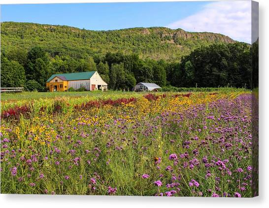 Mountain View Farm Easthampton Canvas Print