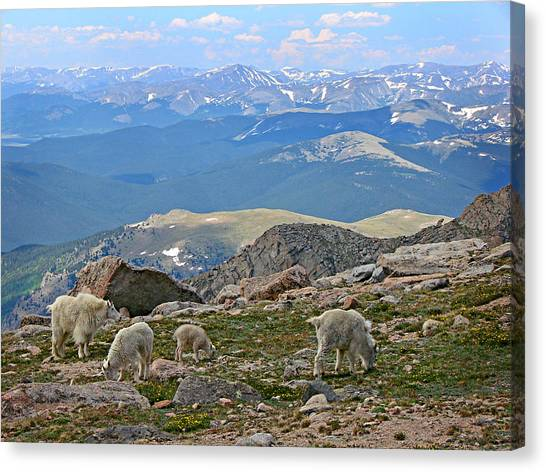 Mountains And Goats Canvas Print