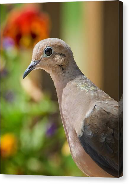 Mourning Dove And Flowers Canvas Print
