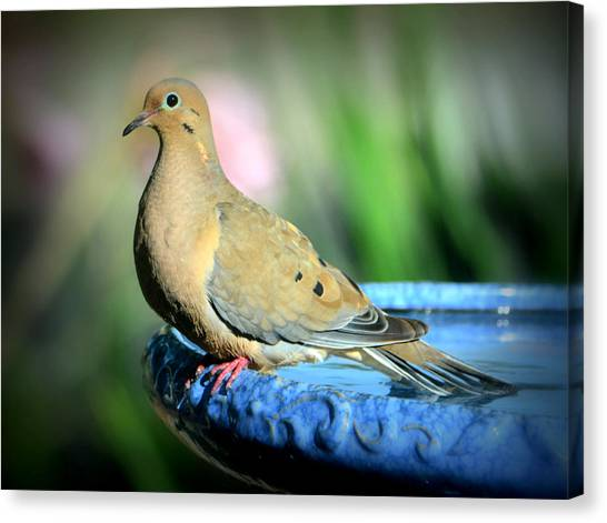 Mourning Dove Perched Canvas Print