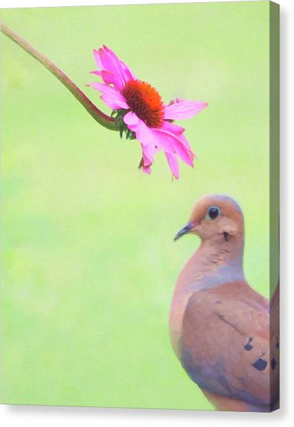 Canvas Print featuring the photograph Mourning Dove by Sue Collura