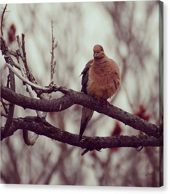 Symbolism Canvas Print - Mourning Doves Have Special Meaning To by Kerri Ann Crau