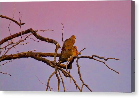 Mourning Doves Canvas Print