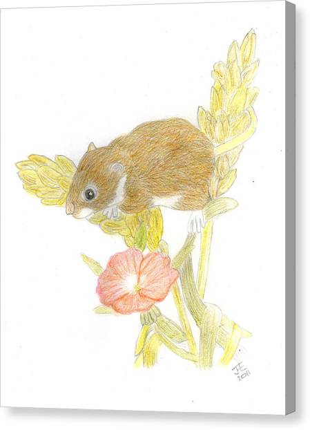 Mouse On The Corn Canvas Print by Jacqueline Essex