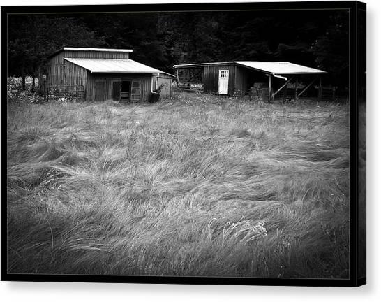 Moving Grass Canvas Print by Dale Stillman