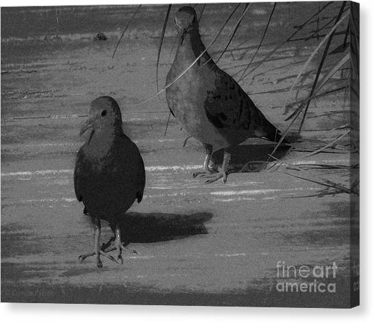 Mr And Mrs Dove Canvas Print