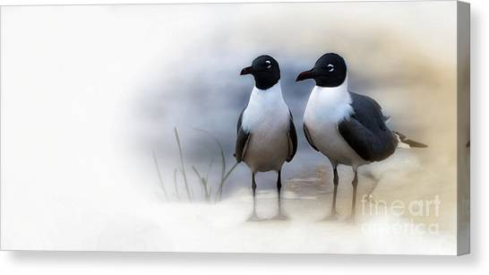 Mr And Mrs Laughing Gull Canvas Print