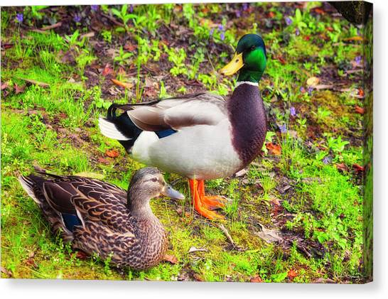Mr And Mrs Mallard Canvas Print