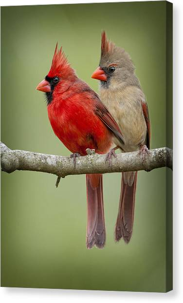 Cardinals Canvas Print - Mr. And Mrs. Northern Cardinal by Bonnie Barry
