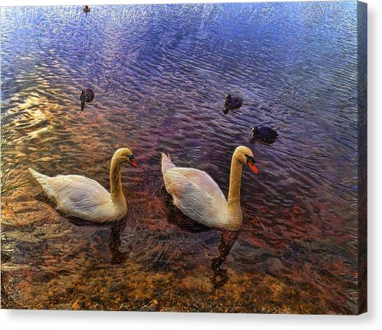 Mr And Mrs Swan Go Viisiting Canvas Print