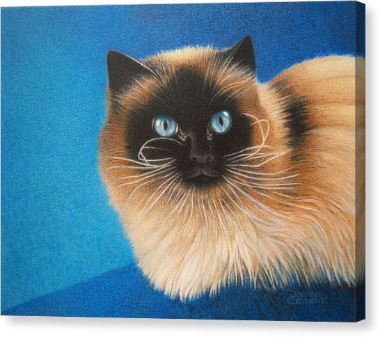 Himalayan Cats Canvas Print - Mr. Blue by Pamela Clements