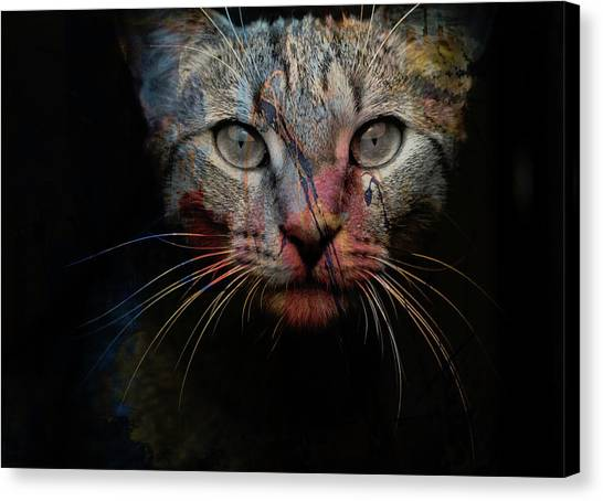 Colourful Canvas Print - Mr Bo by Paul Lovering