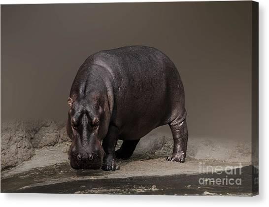 Mr. Hippo Canvas Print