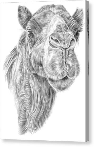Mr Rak Camel Canvas Print
