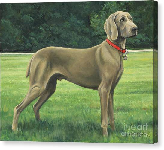 Weimaraners Canvas Print - Mr. Turk by Don Langeneckert
