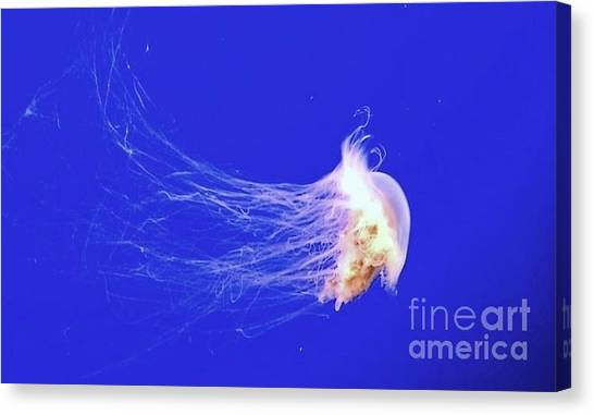 Mr.jelly Canvas Print