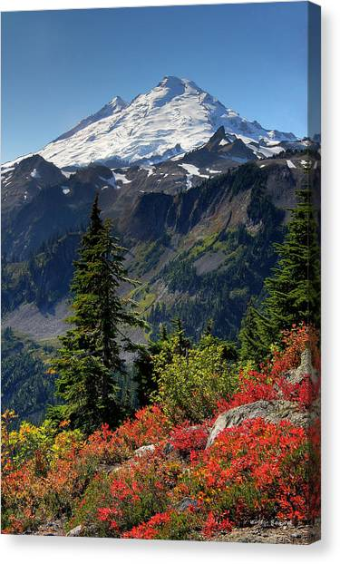 Volcanoes Canvas Print - Mt. Baker Autumn by Winston Rockwell