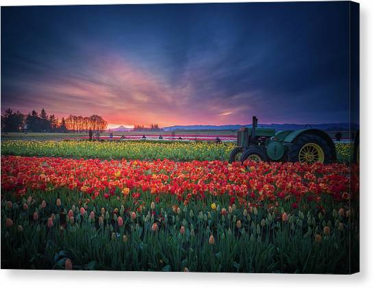 Mt. Hood And Tulip Field At Dawn Canvas Print