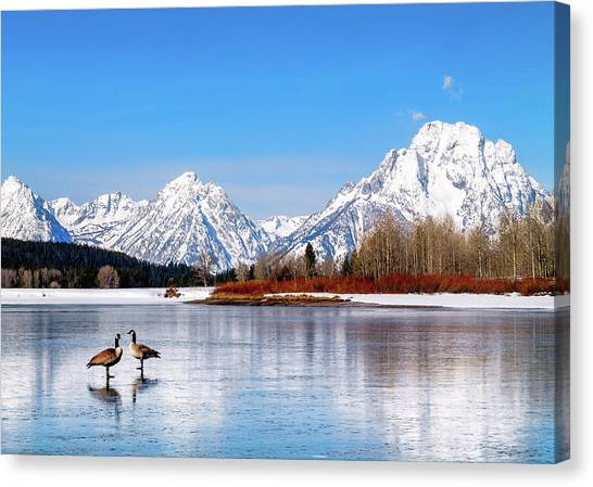 Mt Moran With Geese Canvas Print