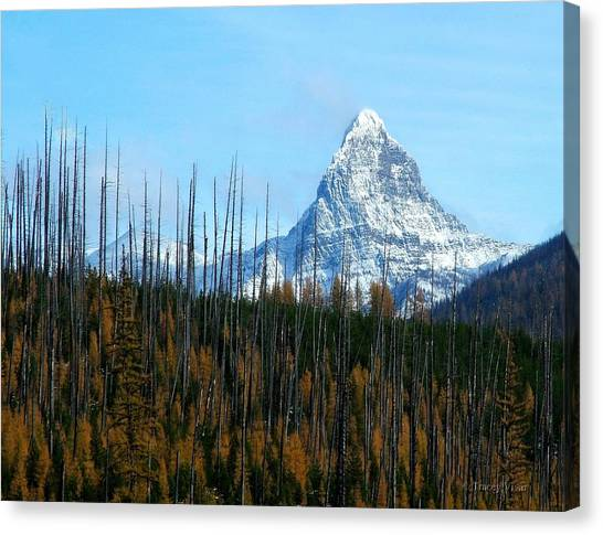 Mt St Nicolas After The Fire Canvas Print
