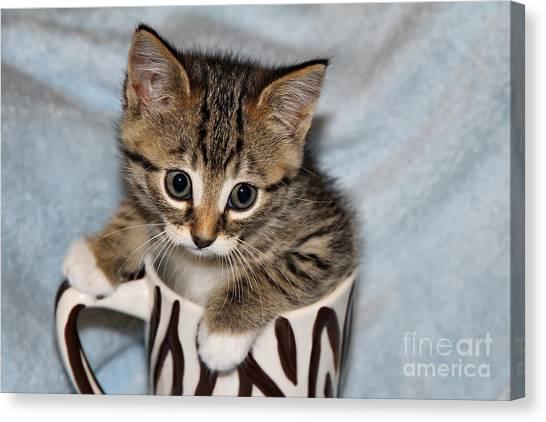Mug Kitten Canvas Print