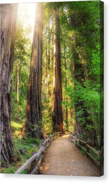 Forest Paths Canvas Print - Muir Woods Forest Path And Redwood Trees by Jennifer Rondinelli Reilly - Fine Art Photography