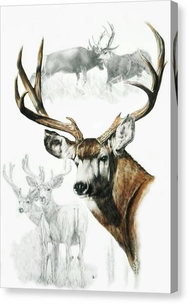 Canvas Print - Mule Deer by Barbara Keith