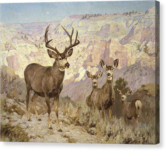 White-tailed Deer Canvas Print - Mule Deer In The Badlands, Dawson County, Montana by Rungius Carl