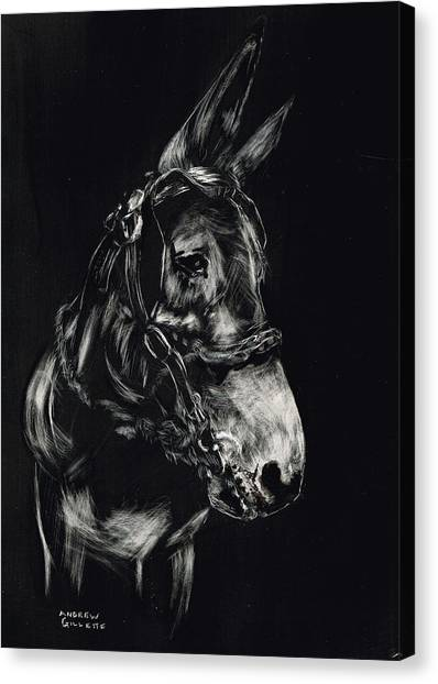 Mule Polly In Black And White Canvas Print