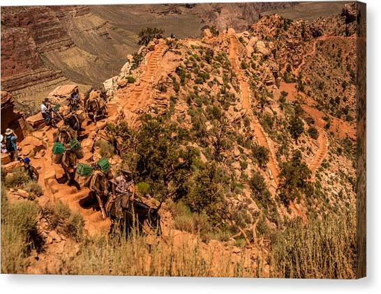 Canvas Print featuring the photograph Mule Train South Kaibab Trail by Claudia Abbott