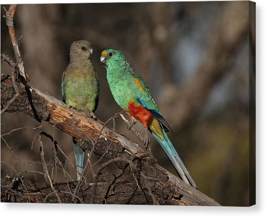 Mulga Parrot Pair Canvas Print