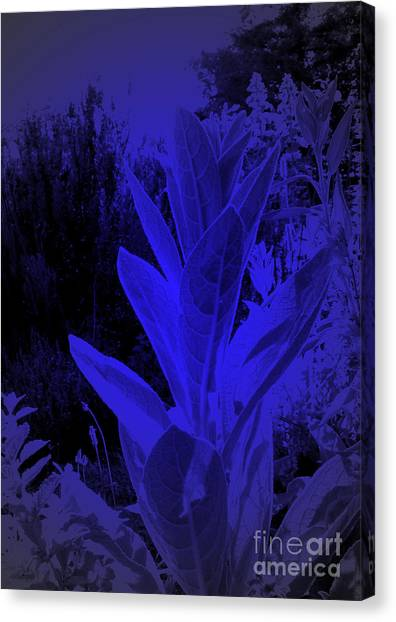 Mullein In The Moonlight Canvas Print by JoAnn SkyWatcher