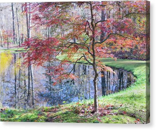 Multi Color Japanese Maple Canvas Print