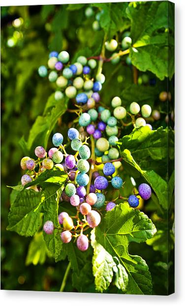 Multicolored Berry Vine Canvas Print