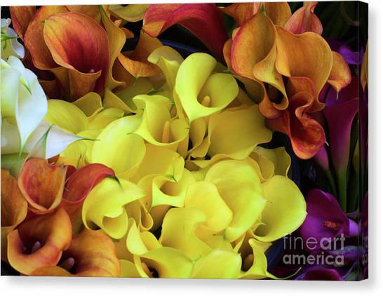 Multicolored Calla Lillies Canvas Print