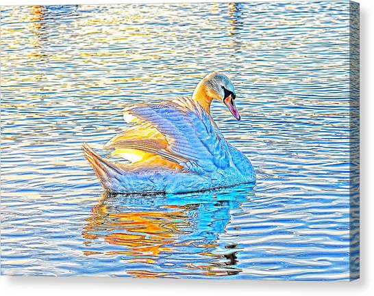 Multicolour Swan Canvas Print