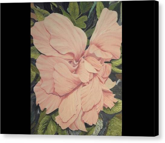 Multipetaled Pink Hibiscus Canvas Print