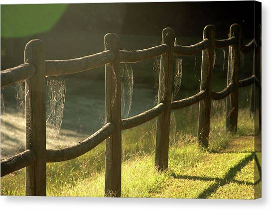 Multiple Spiderwebs On Wooden Fence Canvas Print