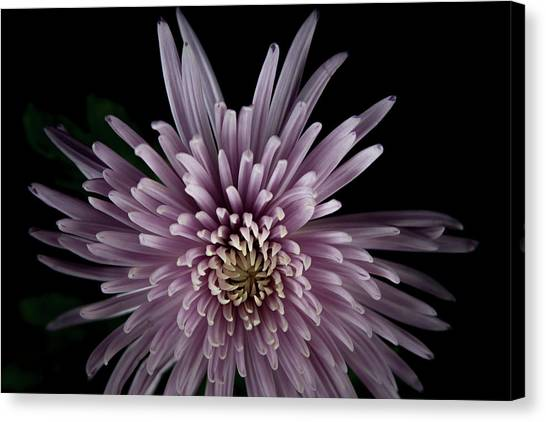 Canvas Print featuring the photograph Mum by Eric Christopher Jackson